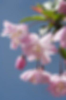 f0124737_0134335.jpg