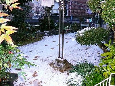 雪の朝_c0087349_1953417.jpg