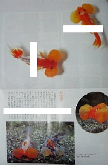 f0138974_12404632.jpg