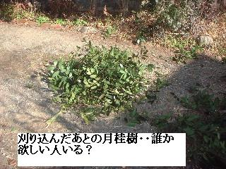 f0031037_17134258.jpg