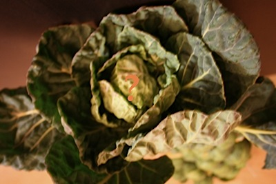 Brussels sprouts_c0156468_19385394.jpg
