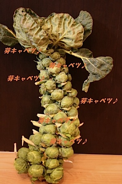 Brussels sprouts_c0156468_19392112.jpg