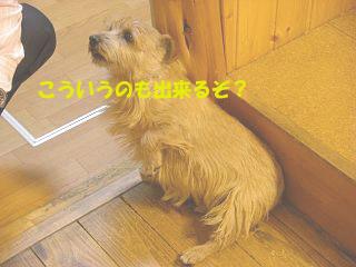 d0043478_1943969.jpg