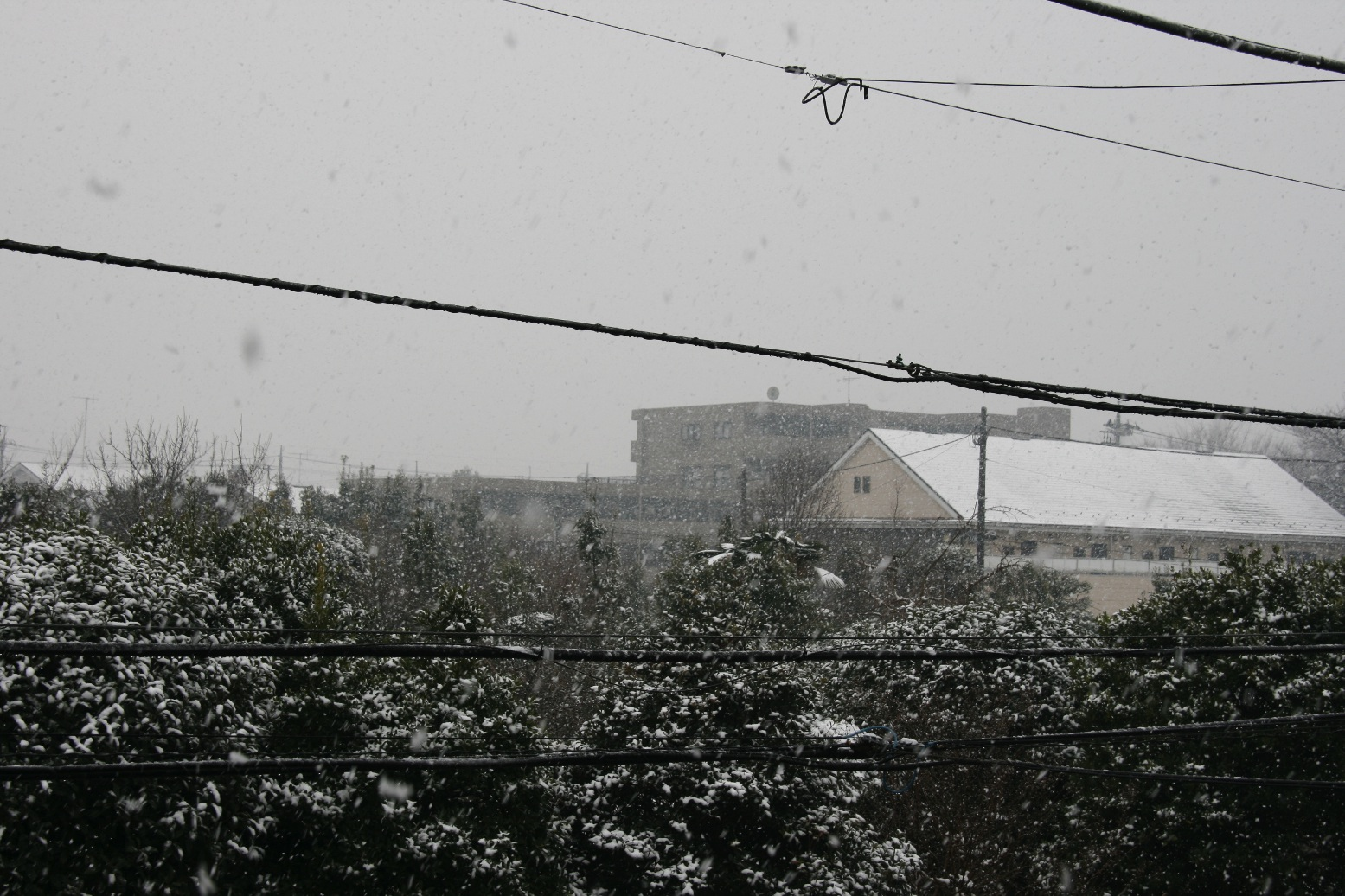雪降る日です_f0141609_14483446.jpg