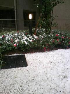 雪_c0075725_13314912.jpg