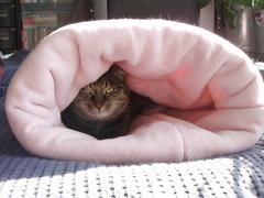 ピンクのトンネル_e0065433_19513691.jpg