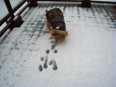 """ベタベタの雪だねぇ~"""""""