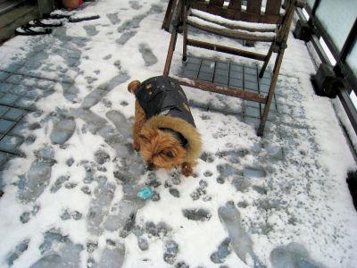 """雪も既に溶けて来ちゃったね~^^;"""""""