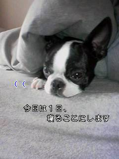 c0110945_1235994.jpg