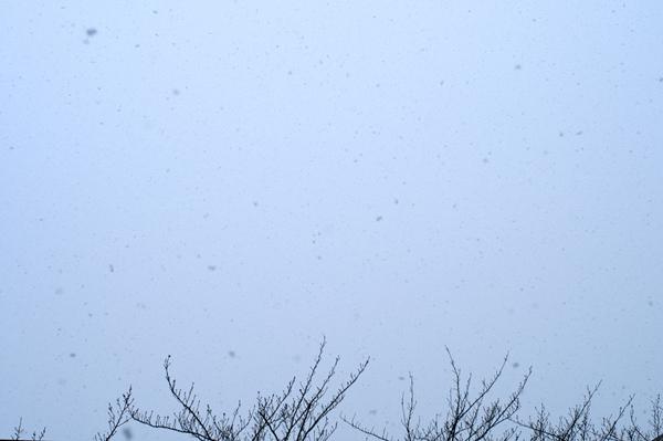 東京の雪_a0003650_9445875.jpg