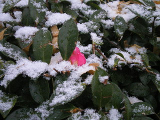 泡沫の初雪だったね_c0118352_22492652.jpg