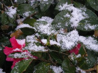 泡沫の初雪だったね_c0118352_22501035.jpg