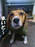 b0098660_21102638.jpg