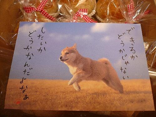 雪の朝の贈り物  。・:*:・゚`☆   さくら sakura が届きました♥_a0053662_11525219.jpg