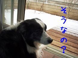 初積雪!_b0003270_14305517.jpg