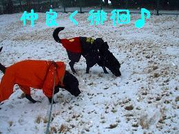 初積雪!_b0003270_14322219.jpg
