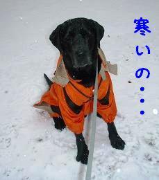 初積雪!_b0003270_14335272.jpg