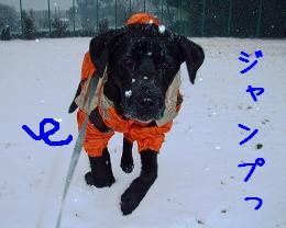 初積雪!_b0003270_14363277.jpg