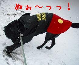 初積雪!_b0003270_1437093.jpg