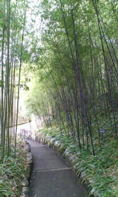 京都は雨。_e0051174_7361781.jpg