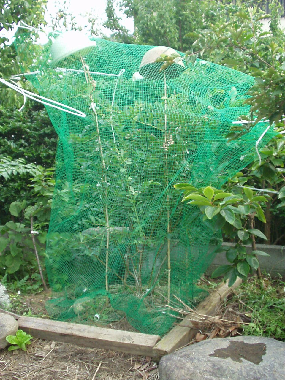 鳥害対策と鳥害防止用複合威嚇装置_f0018078_7291328.jpg