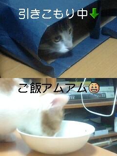 b0112380_11495315.jpg