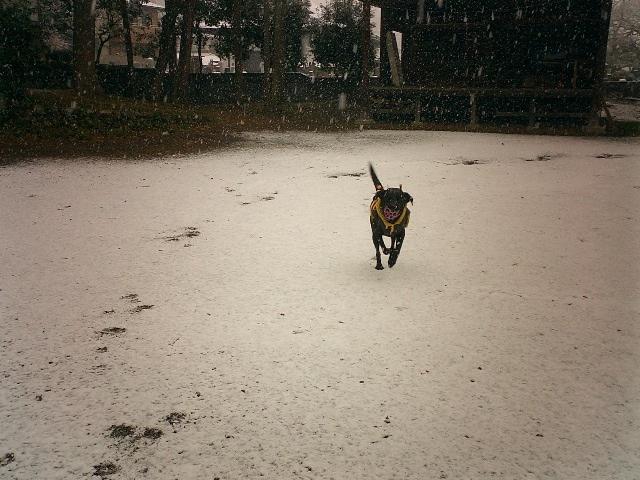 すみれ in Snow。_b0069484_1310331.jpg