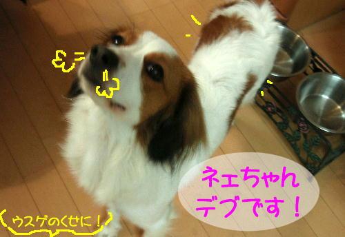 c0075585_1862789.jpg