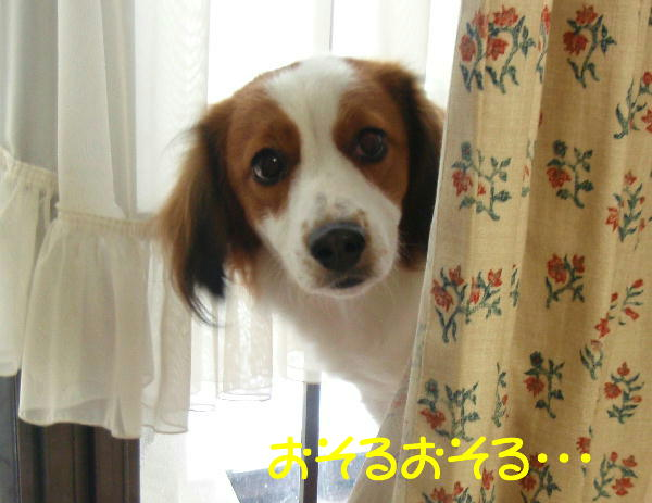 c0075585_1954473.jpg