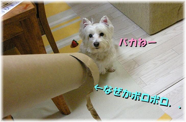 f0039907_183414.jpg