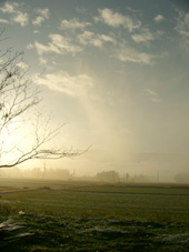 朝起きたら霧の中_b0115652_18351782.jpg