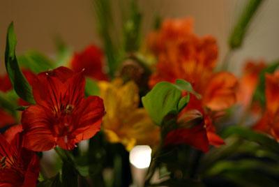 花と音楽に囲まれた歯科医院です。Anita Baker,Nicolai Bergmann,microscope,Tokyo_e0004468_9181392.jpg