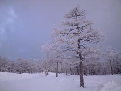 木枯らし吹く日_e0120896_22453292.jpg