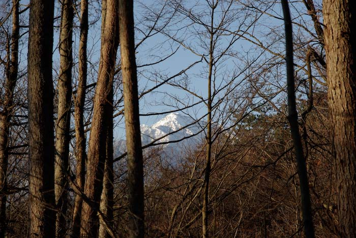 真冬の森も春の準備が進んでる!_c0137403_18315986.jpg