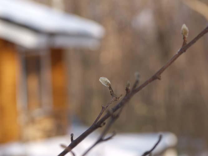 真冬の森も春の準備が進んでる!_c0137403_18372233.jpg