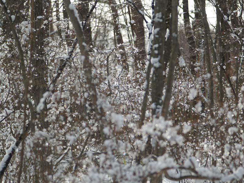 真冬の森も春の準備が進んでる!_c0137403_19382551.jpg