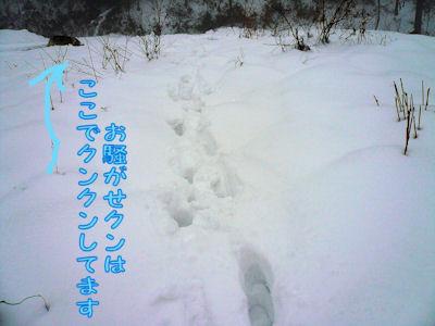 f0112407_11233049.jpg