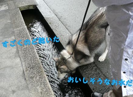 f0112407_1311872.jpg