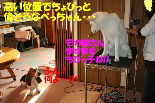 f0121712_9551931.jpg