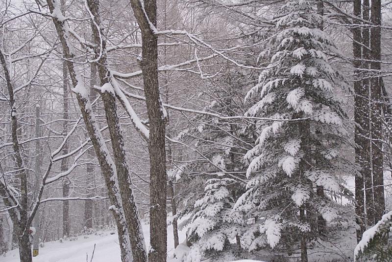 連日の雪です_d0102327_231641.jpg