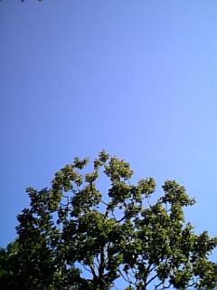 空は何色? 色の手帖(小学館)_e0016828_19572611.jpg