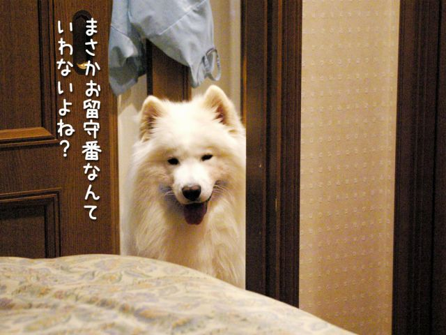 いじけ虫_c0062832_1702154.jpg