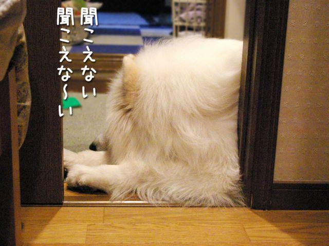 いじけ虫_c0062832_1703273.jpg