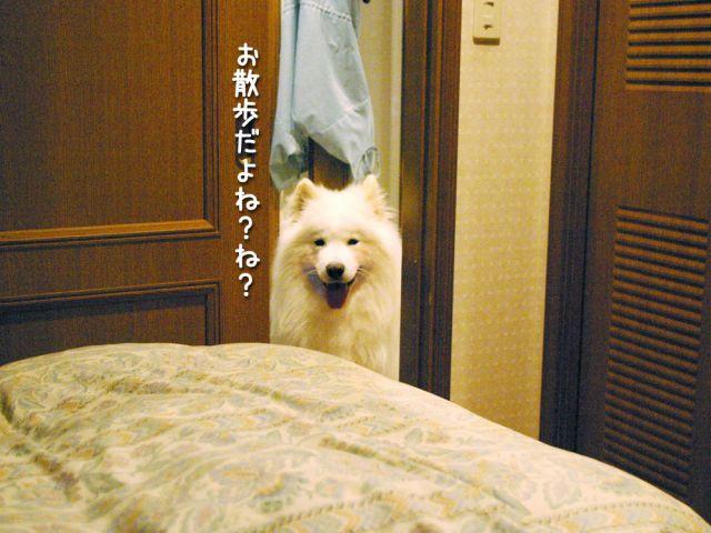 いじけ虫_c0062832_170814.jpg