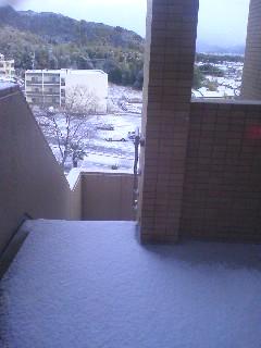 雪だ!_d0147742_8535698.jpg