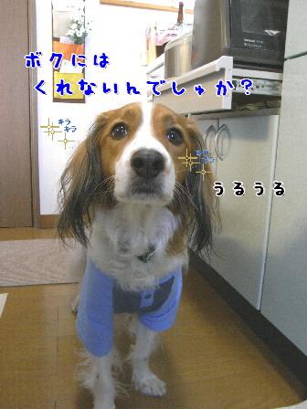 d0013149_7375396.jpg
