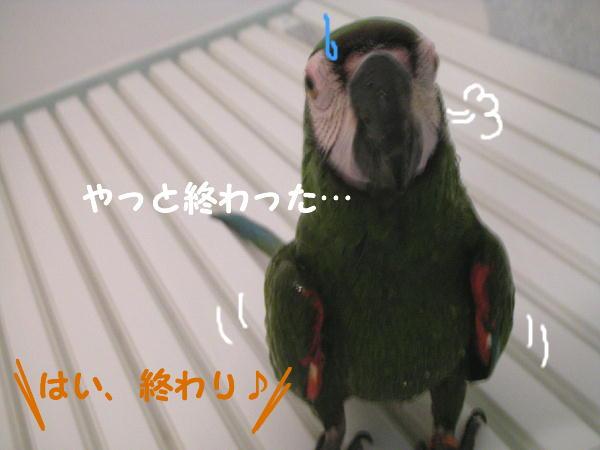 f0132055_0154823.jpg