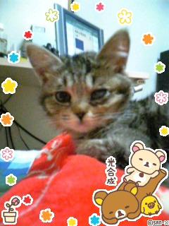 b0110465_2011332.jpg