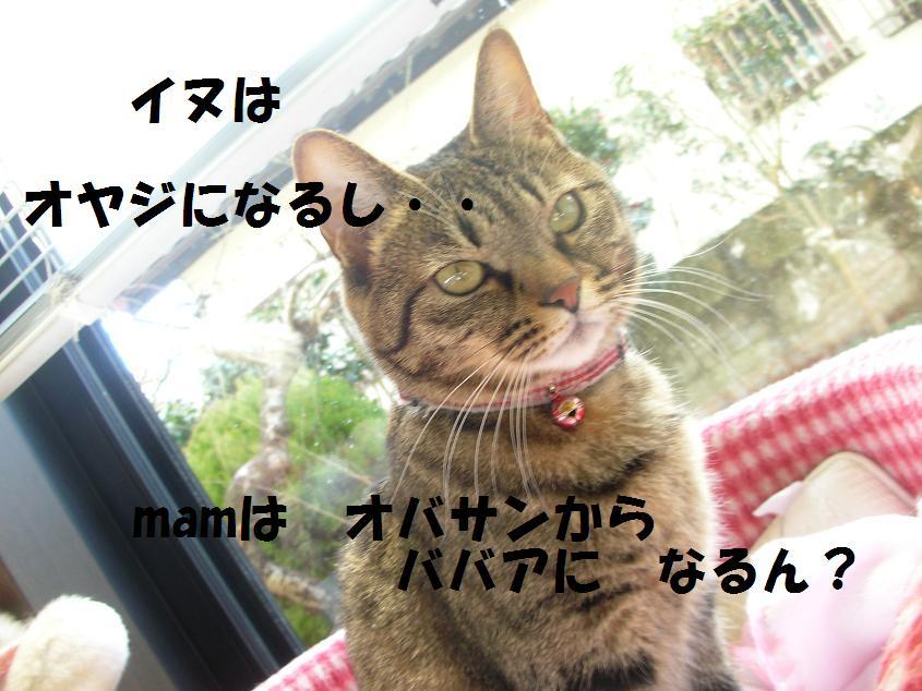 c0139488_1754780.jpg