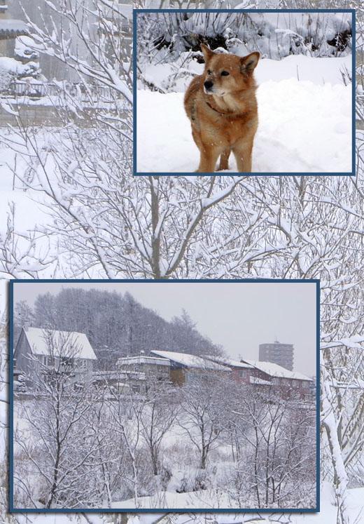 雪やこんこ♪_b0019313_18313255.jpg